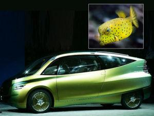 Concept Car and Boxfish